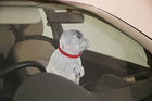 Bill allowing hot car break-ins to House Tues.