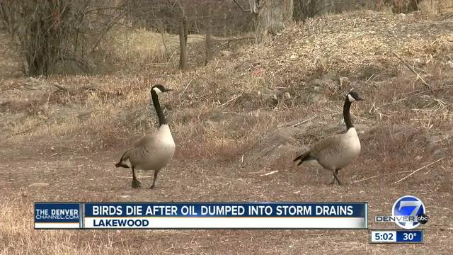 Federal officials say illegal dumping may be cause of waterfowl deaths…