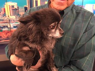 Pet of the Day for March 5 - Augie