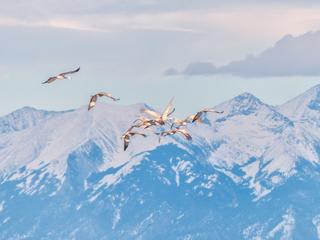 Sandhill cranes make beautiful return to Colo.