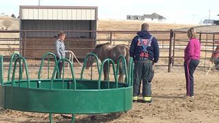 Pony freed from manure spreader near Brighton