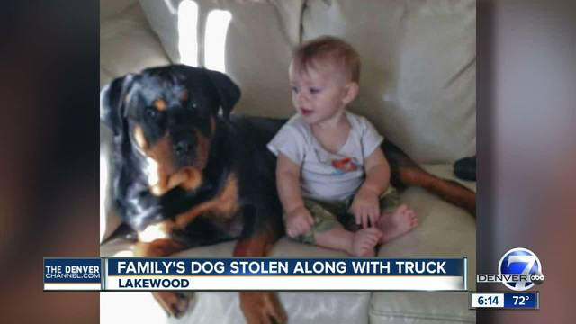 Police looking for car stolen out of Lakewood with family Rottweiler inside