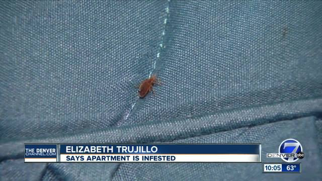 Bed bugs take over a Denver woman-s apartment