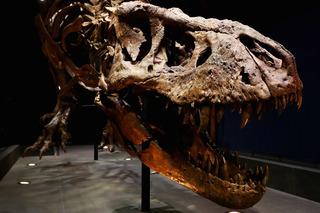 PHOTOS: 10 dinosaurs that roamed Colorado