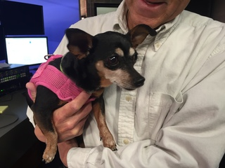 Pet of the day for April 2 - Dorothy