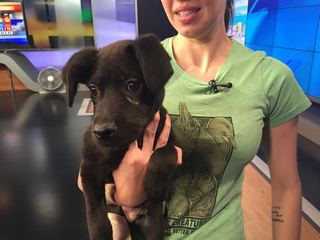Pet of the day for April 9 - JD the puppy