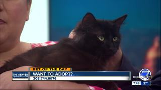 Pet of the day for April 15 - Empire the cat