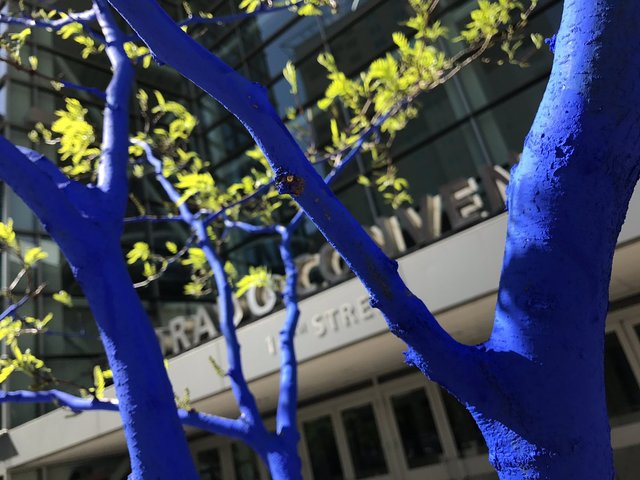 Artist turns Denver-s trees blue to raise awareness about deforestation
