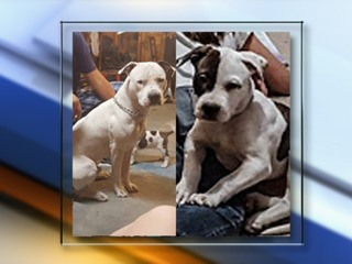 Authorities say decapitated dogs hit by train