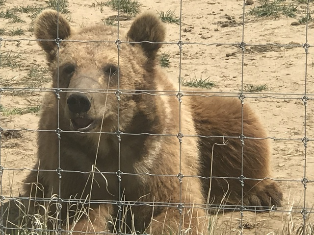 Animal experts question euthanizaton of lions and bears in Elbert County