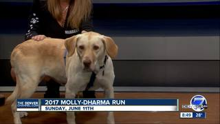 Molly-Dharma run to benefit animal shelters