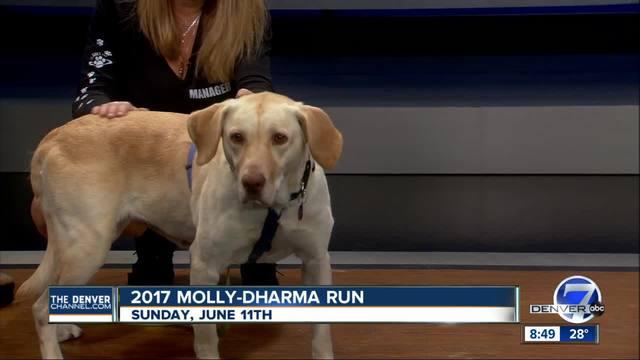 2017 Molly-Dharma run