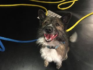 Pet of the day for May 6 - Boots the dog