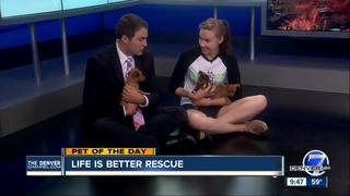 Pet of the day for May 14 - 3 adorable puppies