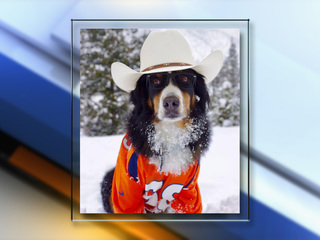 Toby the Bernese mountain dog has died