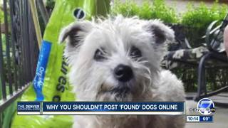 Family says lost dog claimed by a stranger