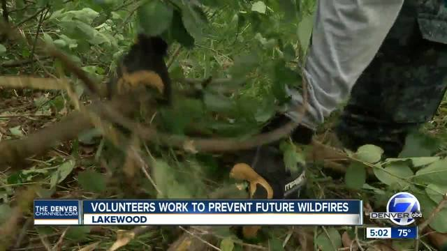 Volunteers work to remove dead trees- brush from areas vulnerable to wildfires