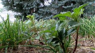 Marijuana business offers weed for weeds