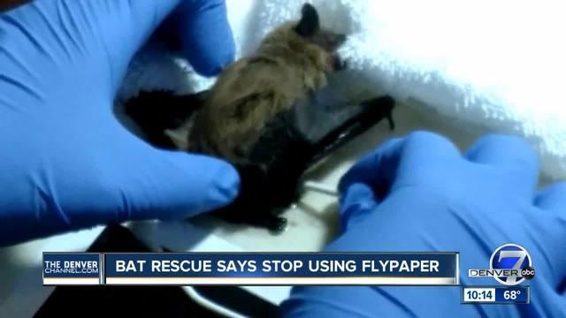 Colorado Bat Rescue saving bats stuck on flypaper