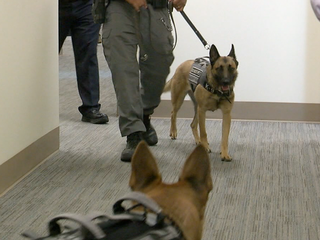 K9s sniff out contraband at Denver jail