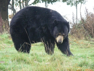 Bear killed after attack had human DNA on claws