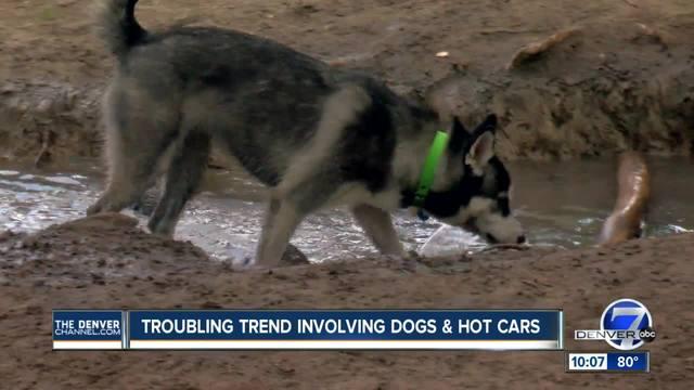 1Disturbing pattern- Pets left in hot cars in Jefferson County