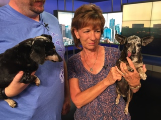 Pet of the day for July 29th - Trixy and Bling