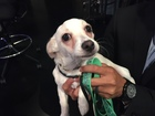 Pet of the day for August 6 - Dobby the puppy