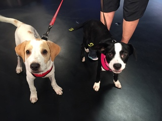 Pet of the day for August 12 - Tango and Pebbles