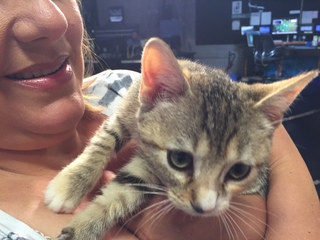 Pet of the day for August 19 - Penny the kitten