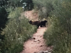 Sow, 2 cubs euthanized for hiker aggression
