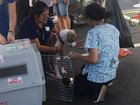 Pets displaced by Hurricane Harvey coming to CO