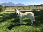 Colorado 'Game of Thrones' fans abandon Huskies