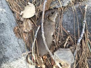 Lakewood mom: Apartment has massive rat problem