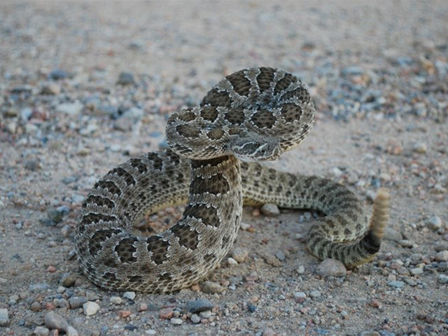 Rattlesnakes force closure of JeffCo trail