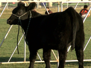 Boosters turn cow poop into money for school