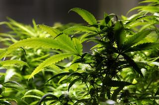 Gillibrand signs on to marijuana reform bill