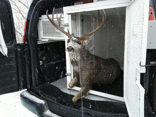 Tired deer rescued from frozen Colo. reservoir