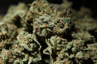 NV pot regulators get money to deal with demand