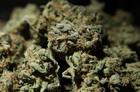 Milwaukee to vote on legalizing marijuana