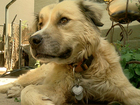 Colorado dog missing for months comes back home