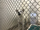 Dog used in sex acts euthanized Tuesday