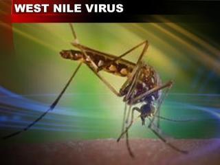 Mosquito spraying underway in Fort Collins