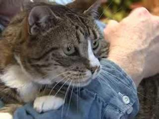 Free neuter/spay weekend for Grand Junction cats