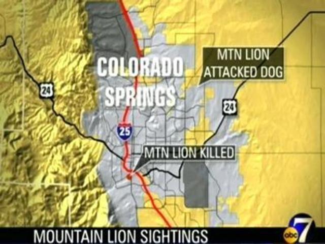 Mountain Lion Shot In Colorado Springs - Denver7 TheDenverChannel.com