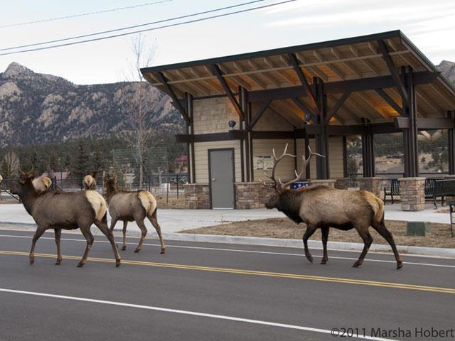Thousands Descend On Estes Park Rocky Mountain National