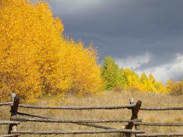 Fall Colors Explained Why The Leaves Of Aspen Trees Change From Green To Gold In Autumn Denver7 Thedenverchannel