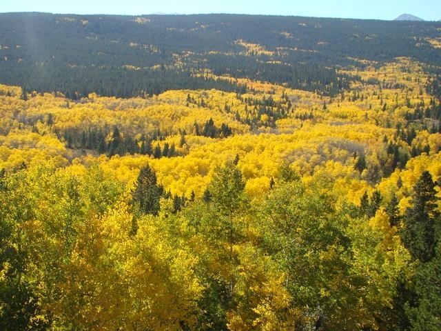 Colorado fall colors guide 2015 where and when to find the most fall colors on the peak to peak rd sciox Choice Image