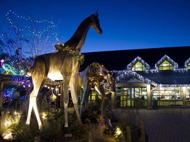 Debbieu0027s Deals: Zoo Lights Offers Package Deal With Tickets, Hot Chocolate,  Mugs And Glasses