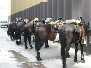 Denver police horse dies after cop forgets it